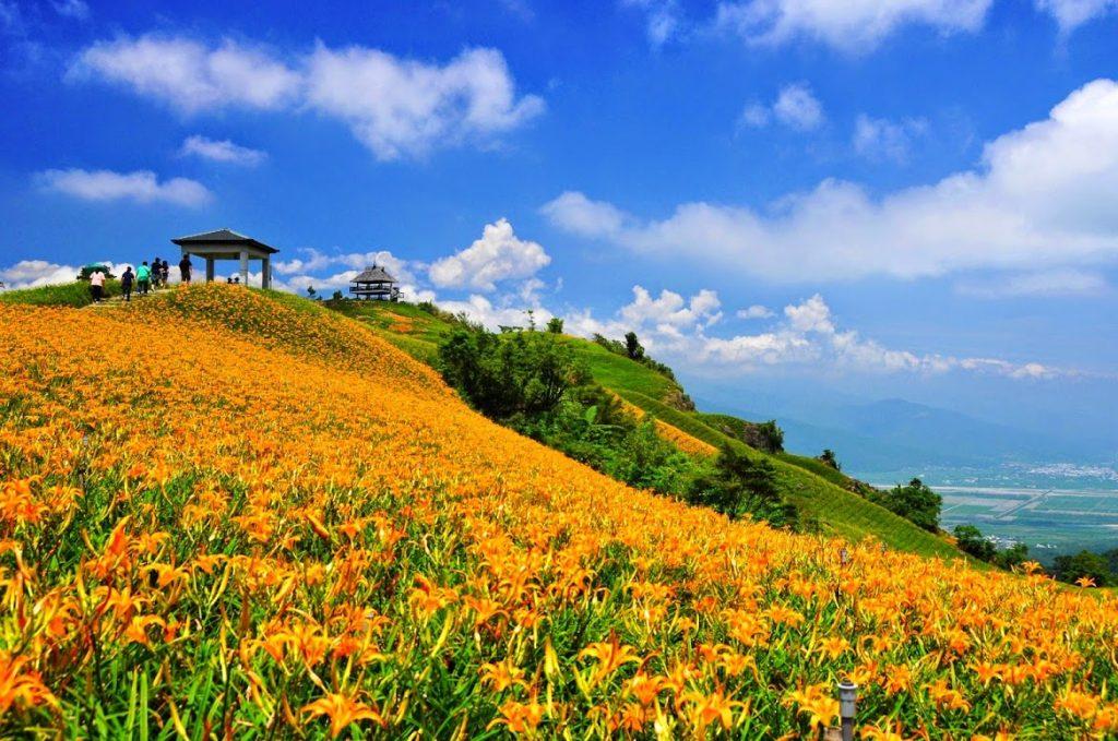 ดอกไม้จีน เป็นต้นไม้ในวงศ์ลิลลี่