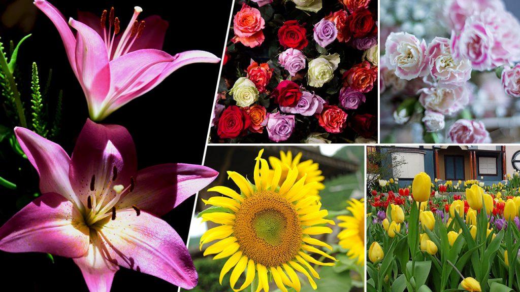 ความเชื่อของดอกไม้