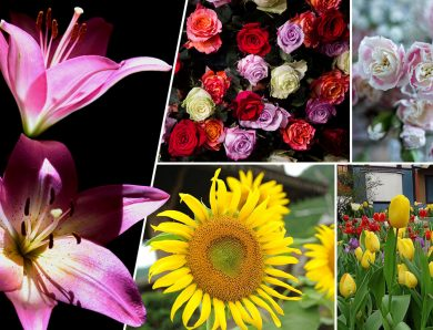 ดอกไม้ตามความเชื่อคนไทย