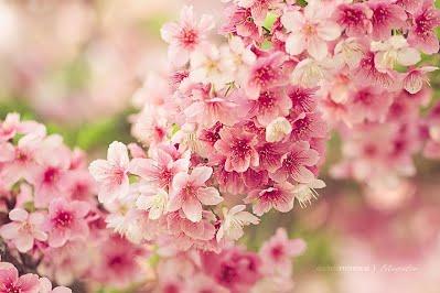5 อันดับ ดอกไม้สวยที่สุดในโลก