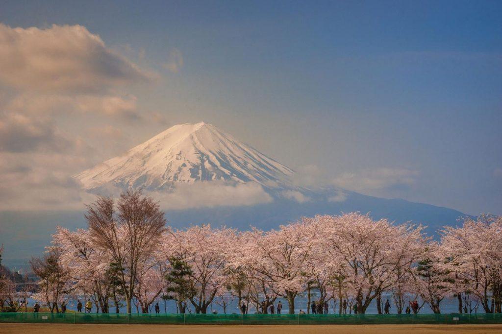 ดอกไม้ต้อนรับฤดูใบไม้ผลิของญุี่ปุ่น