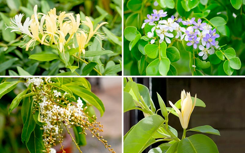 ความหมายดอกไม้ไทย