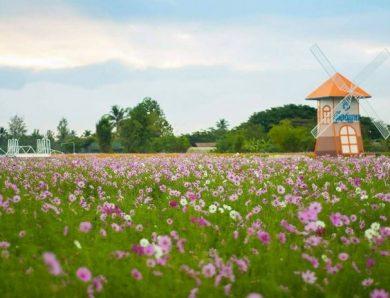 สถานที่ชมทุ่งดอกไม้บาน