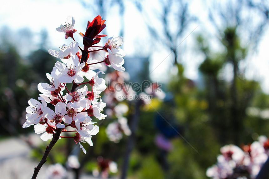 ดอกไม้ฤดูร้อน