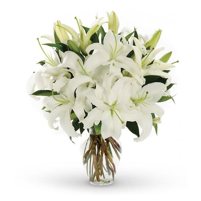 ดอกลิลลี่สีขาว