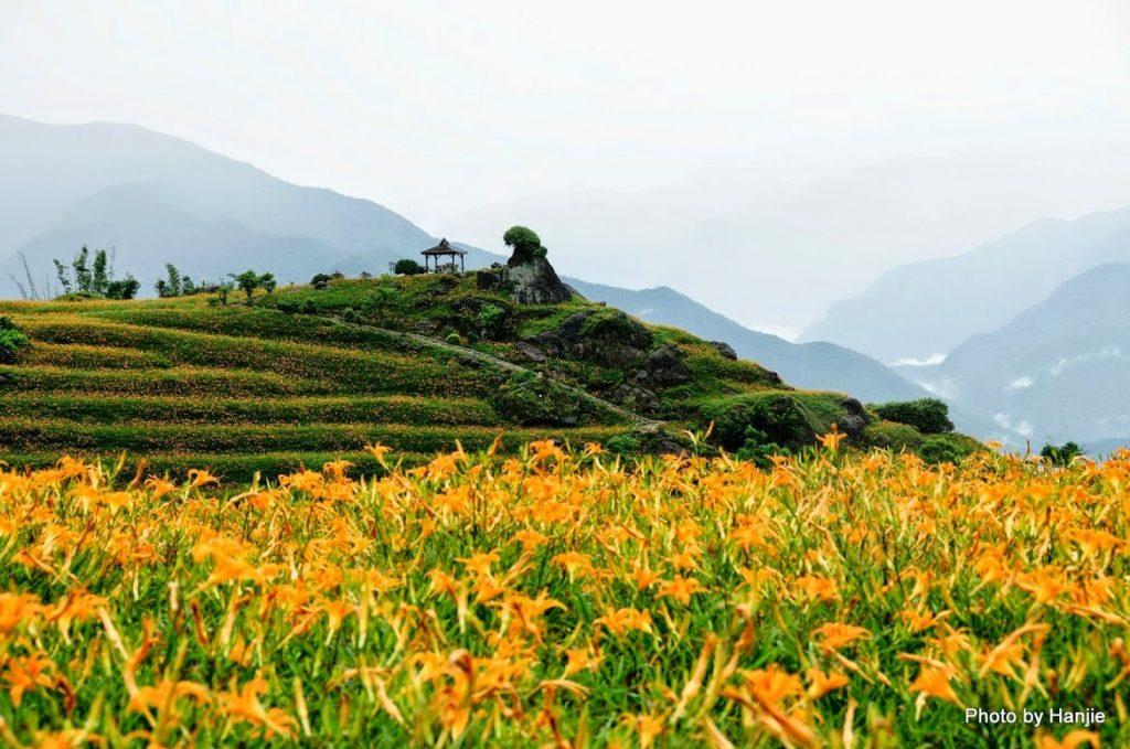 ดอกไม้จีน